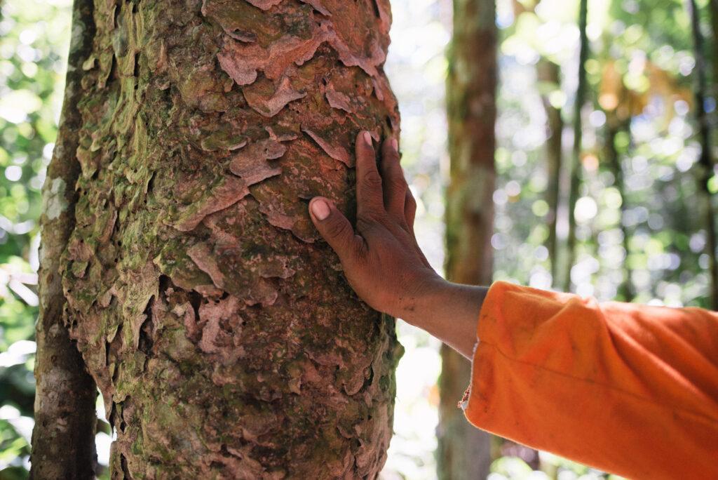 Imagem de uma mão tocando o tronco de uma árvore. Ao fundo, é possível ver as sombras de outras árvores e a luz do sol